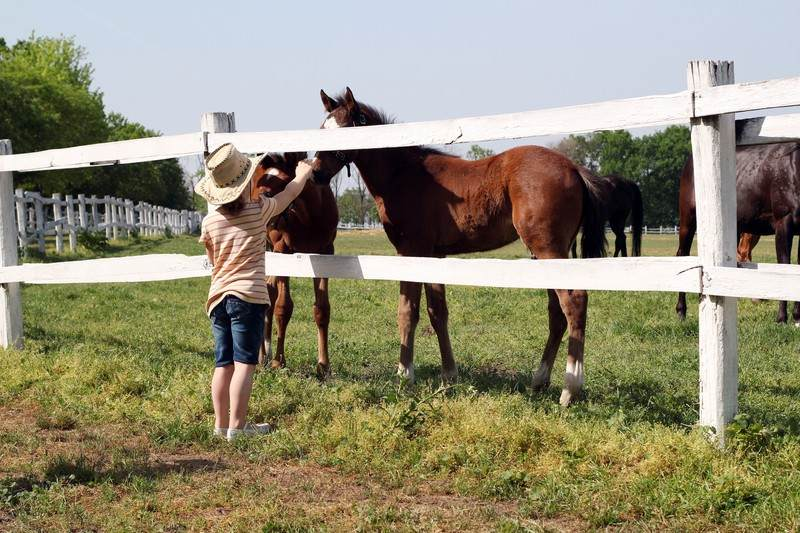 Find over 20 federal and private grants for homesteaders for Where to buy cheap land for homesteading