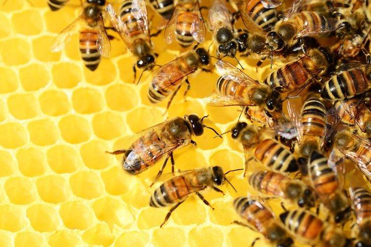 living off-grid with honeybees